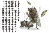 【痛恨のミス:セミ編】