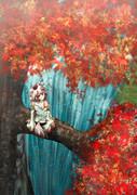 落ち逝く秋