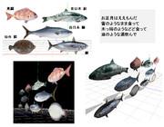 mmd正月魚