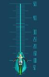 メタセコ用身長測定器(大体)