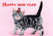 ヘビのせ猫 -Happy New Year 2013- (世界最小のヘビ&アメショー)