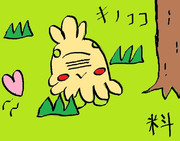 第15回作品「キノココ」