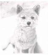 鉛筆で柴犬