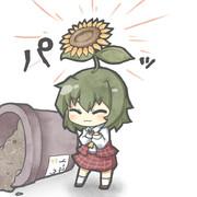 咲きました!!!