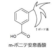 CULボン酸