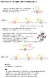 【MMD】ロボモデルのシリンダー構造を人物モデルの首筋に応用メモ