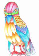 - 色 彩 鳥 -