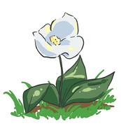 【魔女の家】最上階に咲く白い花