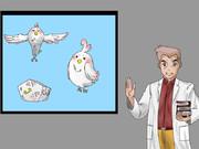 デラ・モチマッヅィ 鳥ポケモン