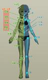 人体とMMD ふろく