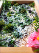 流れ着いた花(視点を変えて)