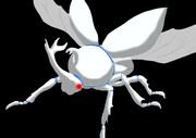 白いカブトムシ