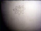 睡蓮(手描き)