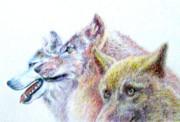 3匹の オオカミ