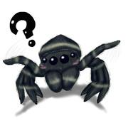 鏡を見た蜘蛛の反応