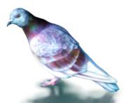 ポーカーフェイスな鳩