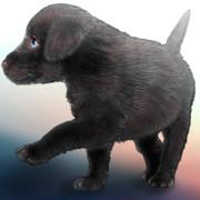 黒い 子犬