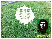 Wild Vegetables(野生の野菜)による革命
