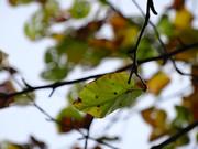 大沼の紅葉 「緑」