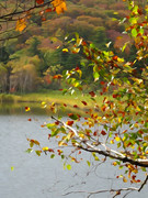 大沼の紅葉 「白樺」