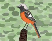 小鳥ジョウビタキ