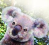 コアラ の顔