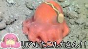 【MMD】リアルたこルカさん?