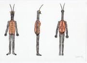バイオリンムシ女