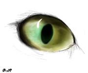 うちの猫の目