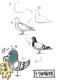 鳥の描き方