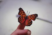 【切り絵】キタテハ(蝶)