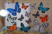【切り絵】cutting蝶々