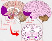 サイコパスの脳において異状が見られる部位(紫色)