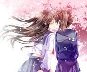 桜の下の赤加賀