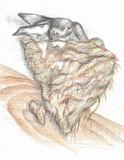 燕の巣(食用不可)