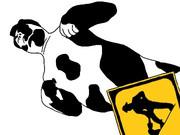 現場乳牛.milk