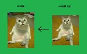 MUR猫の元ネタ