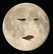野獣の月光