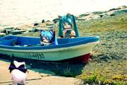 漁村にて、ぬこさん達にイワシを一匹づつあげてみたけど・・