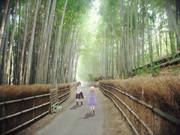 秘封倶楽部×京都の竹林