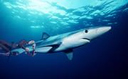 サメを捕まえる平沢進師匠