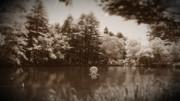 池にすむラッコメリー