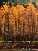 秋を眺めながら【秋のポスター選手権】
