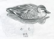 鴨(かも)