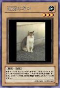 【遊戯王オリカ】近所のネコ