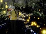 蟲師 -森の道中-差分