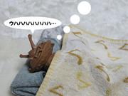 【ウルトラQ49周年】お正月のカネゴン『初夢』