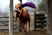 裸馬を駆る神子さん