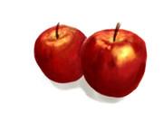 りんご(練習)