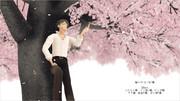 素晴らしい桜の木をお借りしたので。